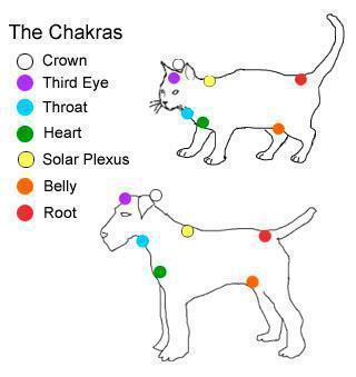 pet chakras