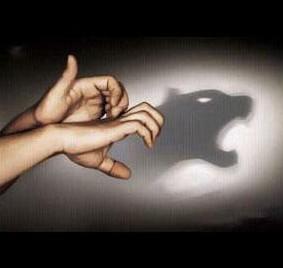shadow tiger