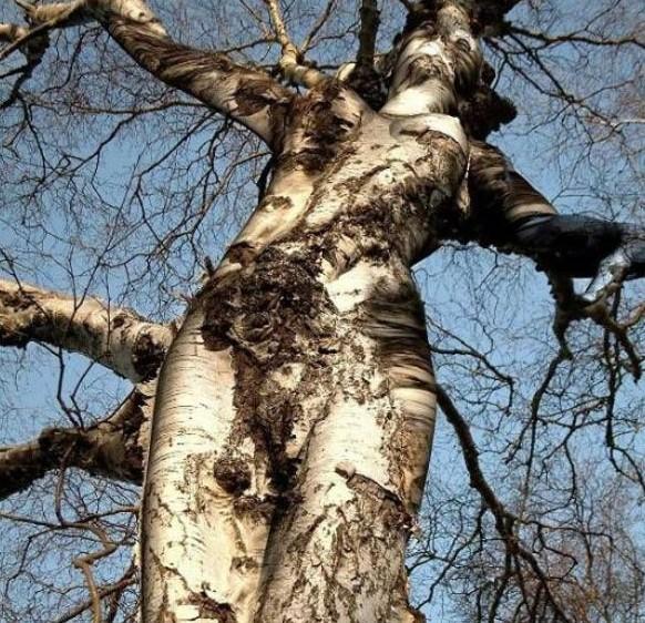 Erda tree of life