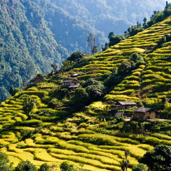 Rice-terraces-While-trekking-around-the-Annapurnas