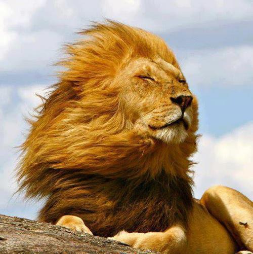Leo lion wind