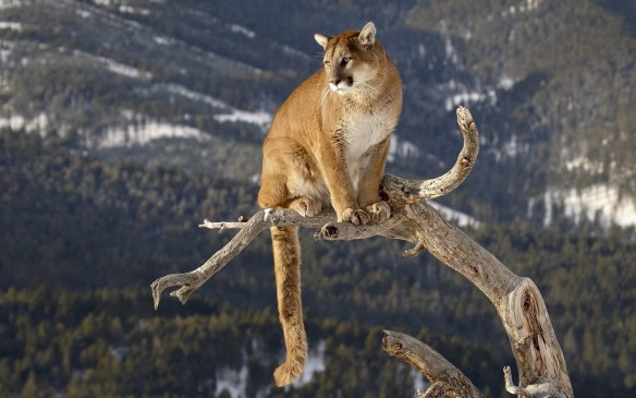 mountain_lion_desktop_pictures