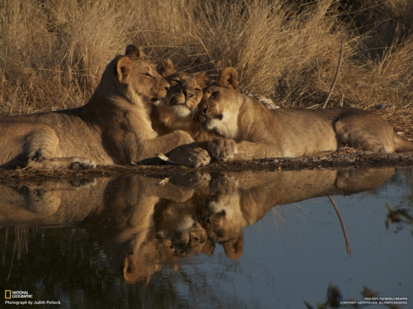 National-Geographic-31th-Week-in-2012-with-Breathtaking-Photos-01