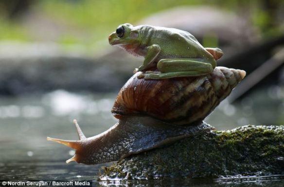 frogsnail